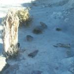 Bosque Petrificado Florentino Ameghino