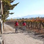 Mountain Bike por Bodegas en Mendoza 1/2 día