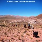 Trekking con llamas: Camino de la Sal (Salinas Grandes - Tilcara)