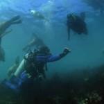 Snorkeling con lobos marinos y Buceo en Patagonia