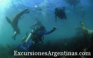 buceo-con-lobos-marinos.jpg
