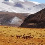 Laguna Brava - Excursión a la Cordillera de los Andes 4300msnm.